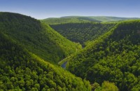 Armenian forest ecosystem protection and management study